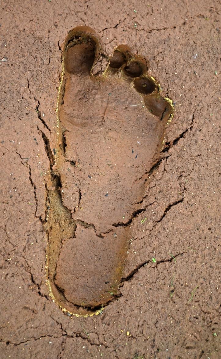 mud-864939_1920